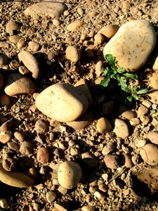argile fluvio-glaciaire à galets