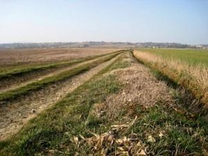 Un chemin rural[nl]de la plaine cultivée