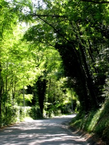 Route du vallon de la Saulaie